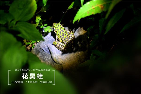 46 花臭蛙
