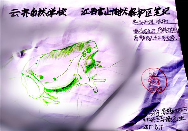 36 华西雨蛙