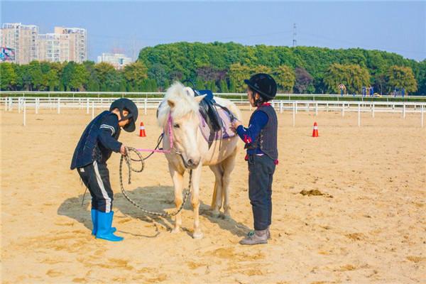 从平凡走向卓越,你可能只需要一匹马
