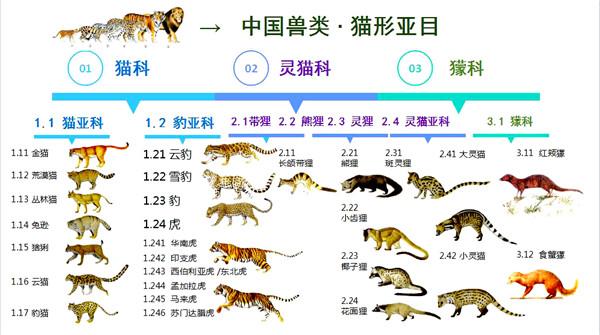 000 20181103 中国兽类猫形亚目